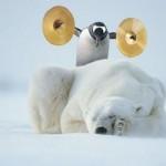 Es ar pingvīniem nerunāju!