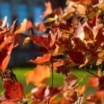 Šokējošs atklājums – zelta rudens pienāk arī ārpus Siguldas