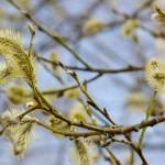 Foto sestdiena pretī pavasarim